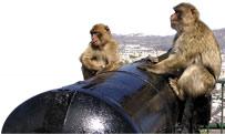 monkey_28